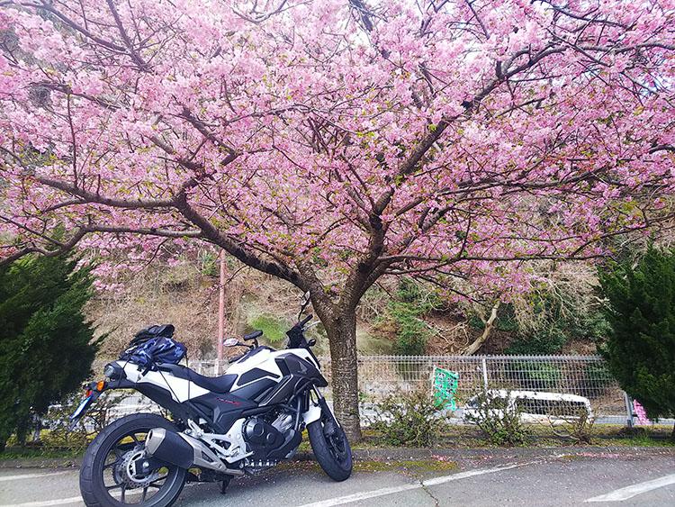 河津桜とNC750x