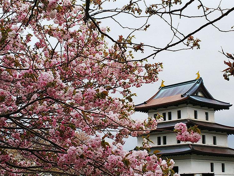 お城と花見