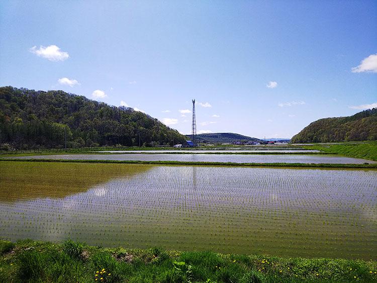 周囲の水田